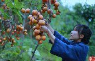 李子柒 Liziqi // C'est une montagne rouge, et à l'automne, il est naturel de faire des kakis doux.