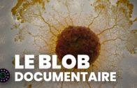 Le blob, un génie sans cerveau (Documentaire complet) | Le Vortex & ARTE